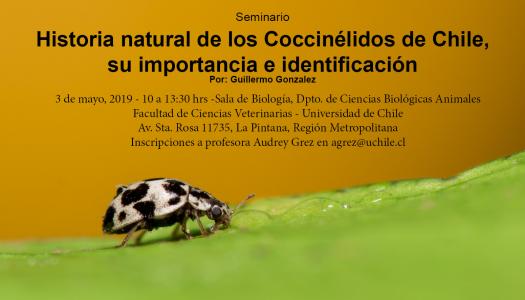 Seminario Coccinellidae