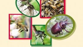 Congreso Nacional de Entomología